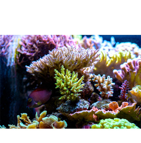 Coral_image2